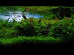 ada aquascaping contest 2008 by berkleyone on deviantart