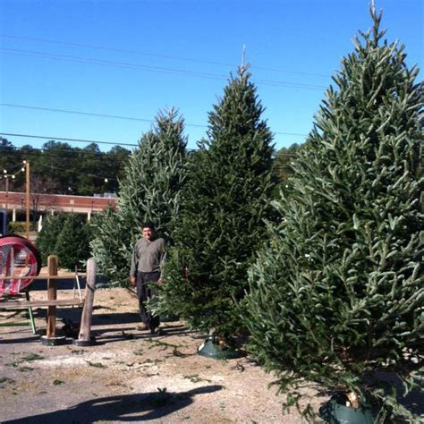raleigh tree farm cranberry tree farm raleigh durham chapel hill and cary nc