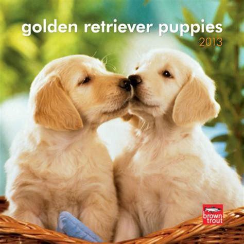 golden retriever puppies new mexico golden retriever puppies 2013 mini calendar kalenders bij allposters nl