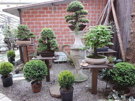 vendita vasi per bonsai mercatino bonsai forum attrezzi e vasi per bonsai