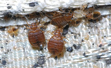 bed bug success stories bed bug educated clients are an asset pest management
