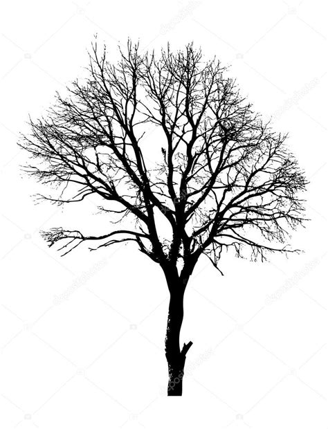 dead tree shape stock vector 169 baavli 58292045