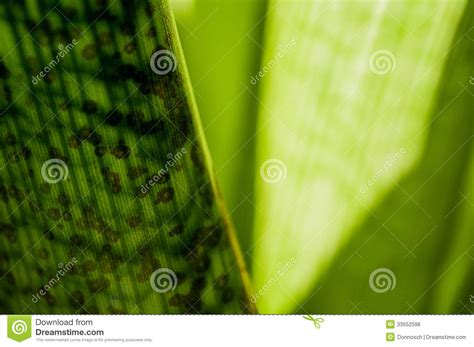 calming green calming green series royalty free stock photos image