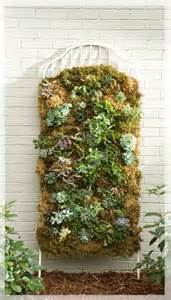 Moss Vertical Garden Vertical Succulent Garden Pictures Photos And Images For