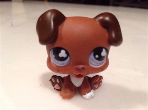 lps boxer puppy littlest pet shop animal boxer puppy lps 657 brown blue freckles ebay