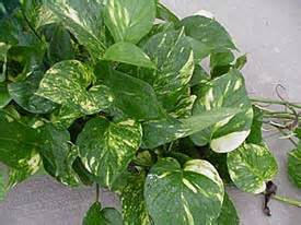 house plant types houseplant needs houseplants of illinois