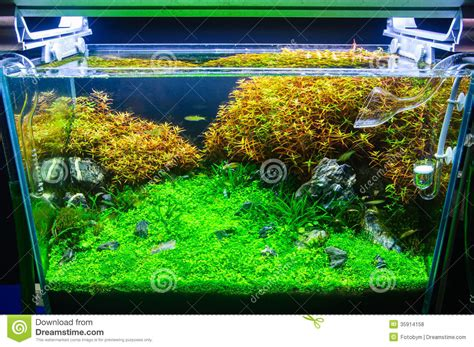 aquascaping freshwater aquarium aquascaping of the planted aquarium royalty free stock