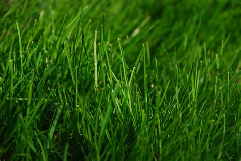Green Grass file green grass jpg wikimedia commons