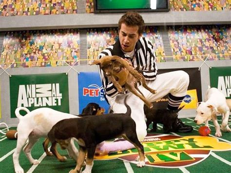 puppy bowl 2017 live the puppy bowl live the cutest event of 2017