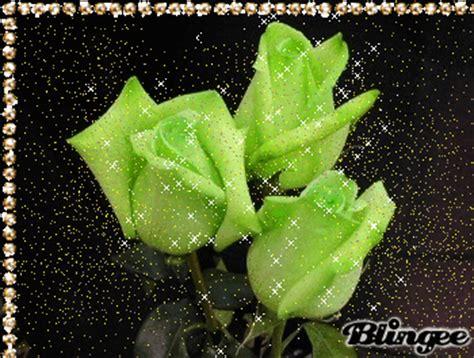 de 6 rosas rojas amor twitter facebook google descripcin con rosas m 193 gicas rosas con movimiento regala una rosa a esa