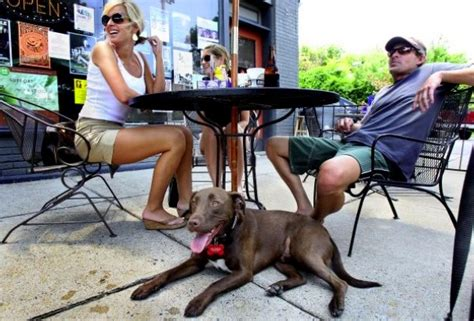 friendly places 4 cape coral pet friendly restaurants your florida home