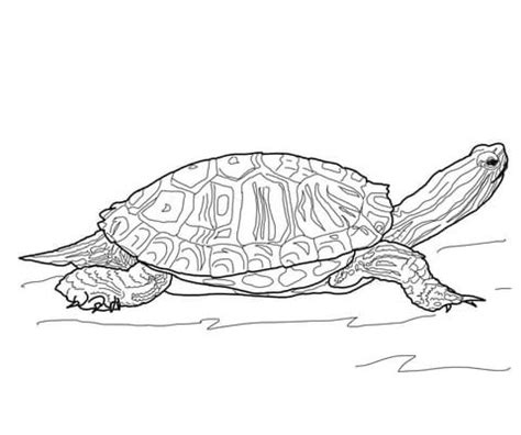 coloring page painted turtle red eared slider turtle coloring page free printable