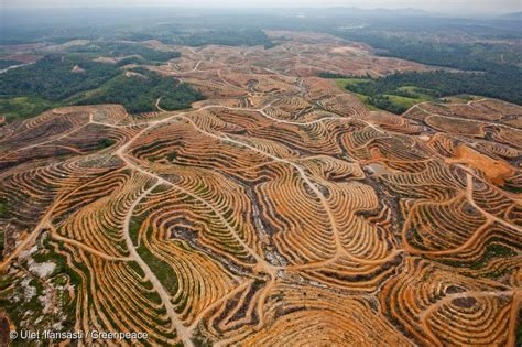 amazon indonesia you stood up for rainforests and companies that use palm