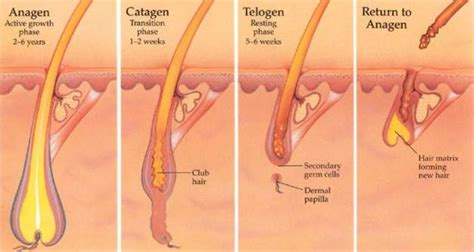 ingrown hair diagram remove dead skin on