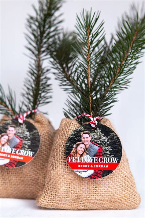 Let Love Grow: Baby Pine Tree Favors   Wedding Inspiration