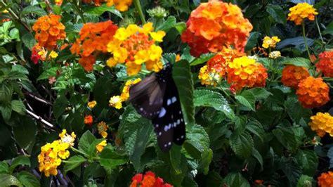 farfalle e fiori farfalle e fiori casa delle farfalle di bordano udine