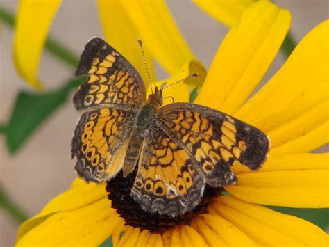 Natural Sciences Grade 7 Invertebrates Animals Names