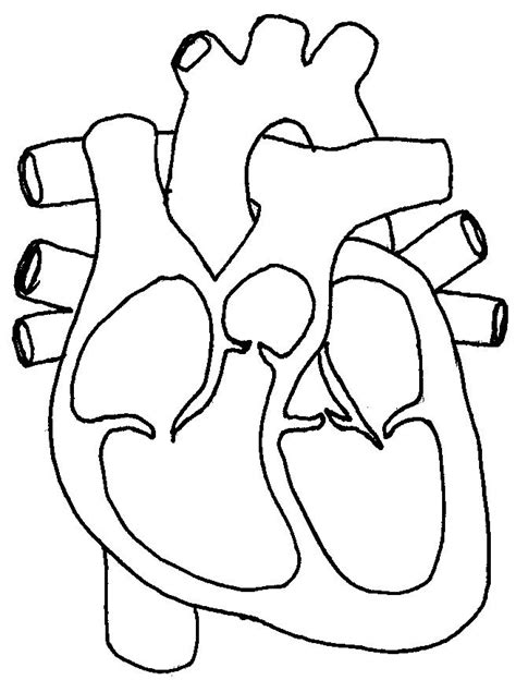 unlabelled diagram   heart   clip art  clip art  clipart library