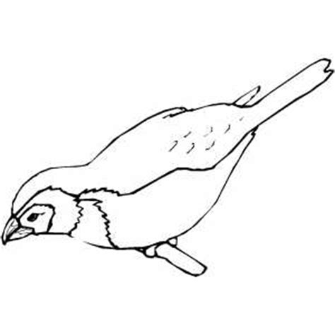 yellow finch coloring page how to draw finches