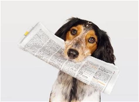 puppy news dogaware articles news archive
