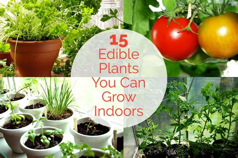 plants that do well indoors plants that do well indoors home designs ideas online