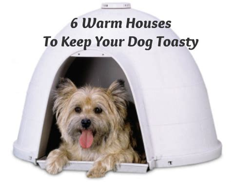 how to keep dog house warm 6 warm houses and gadgets to keep your dog toasty this winter