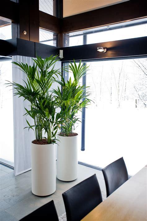moderne zimmerpflanzen so werden pflanzen zum designobjekt das gr 252 ne medienhaus