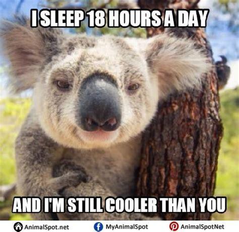 Koala Meme - 98 best different types of funny animal memes images on