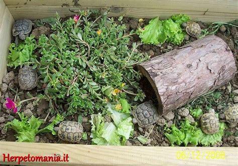 alimentazione tartarughe terra riproduzione tartarughe terrestri