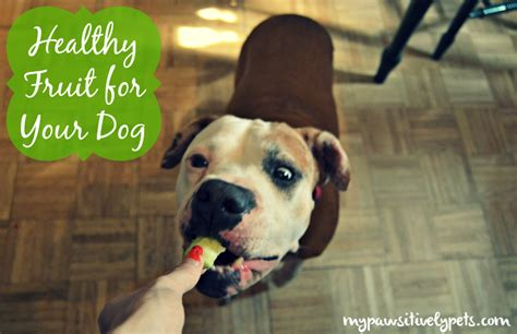 fruits safe for dogs healthy fruit for your pawsitively pets