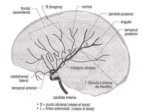 angiografia cerebral angiografia cerebral neurocirug 237 a contempor 225 nea