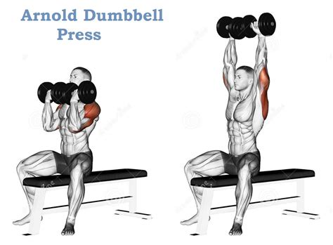 difference between barbell and dumbbell bench press difference between dumbbell and barbell bench press 28 images buy sit up incline decline