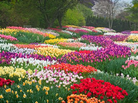 8 Places To See America S Most Beautiful Spring Flowers Beautiful Flowers In Garden
