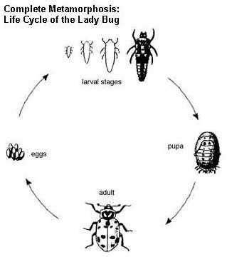 Bumble Bee Diagram