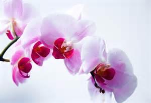 l orchid 233 e la des fleurs ma cigale est fantastique