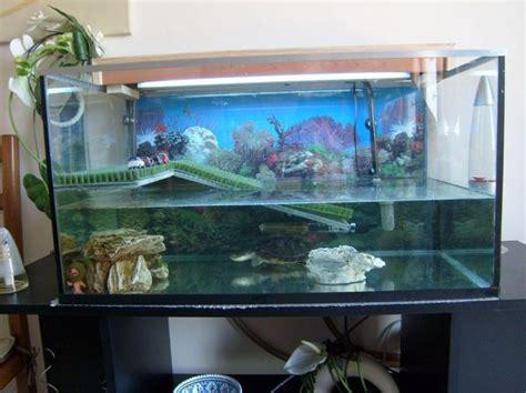 installation d 233 coration fait pour aquarium