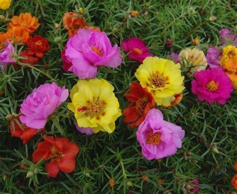 fiori per giardini fiori in giardino fiori per cerimonie scelta dei fiori