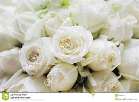 White Roses Stock Photos Image 25241033