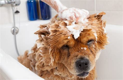 top dogs groom and bath house top 10 dog grooming tips canna pet