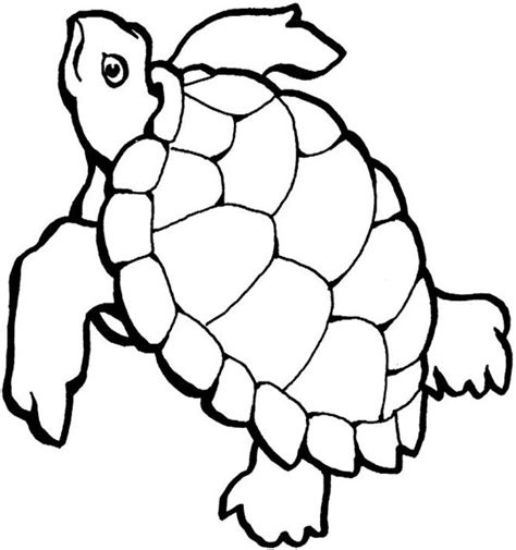 Turtle Outline by Black And White Outline Of Turtle Pictures To Pin On Pinsdaddy