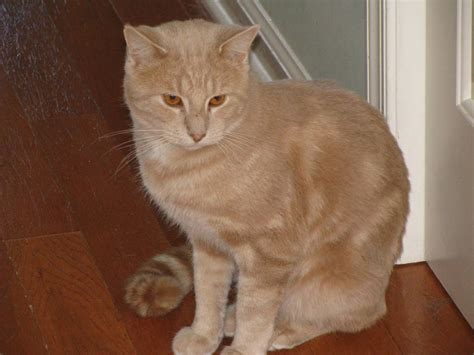 For Cats by Orange Cat Spotted Hackettstown Nj
