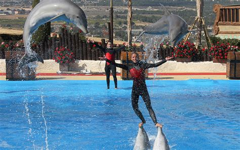 theme park benidorm info how to secure big discounts on tickets for benidorm
