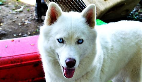 white dogs with blue white blue by tastybedsore on deviantart