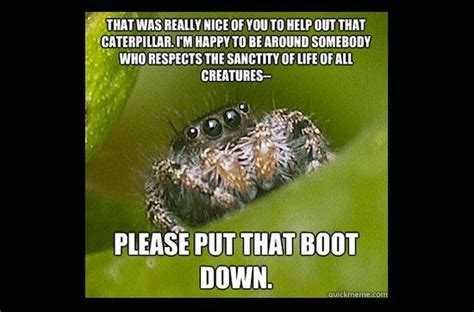 Misunderstood Spider Meme - misunderstood spider meme fun