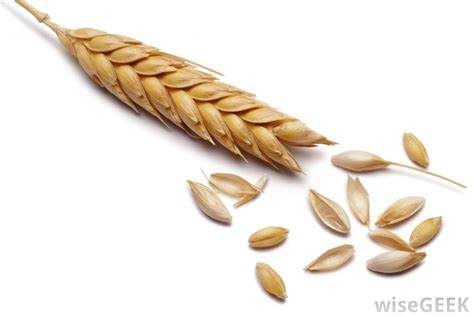 whole grains or no grains what is a grain elevator with picture