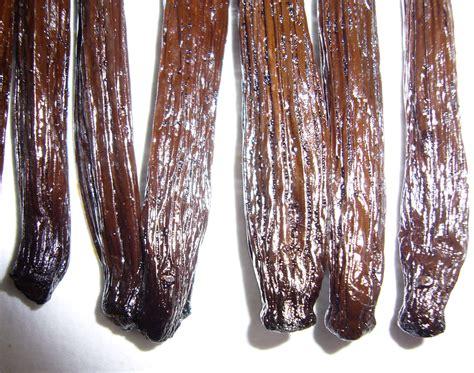 Entrasol Gold Vanilla 600 Gram pin madagascar vanilla bean on