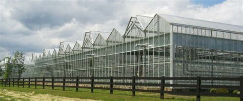 large scale commercial greenhouses garden greenhouse