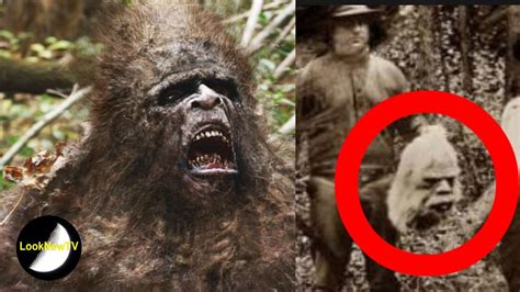 best bigfoot 5 best bigfoot sightings on