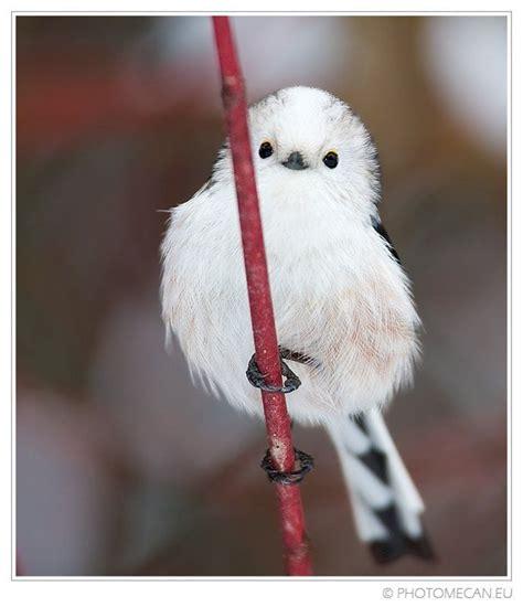 Doves Look Like Summer Feel Like Summer Contest by Korean Bird