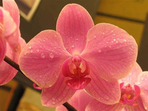 Imagenes De Flores Hermosas Orquideas | orqu 237 deas rosas im 225 genes y fotos